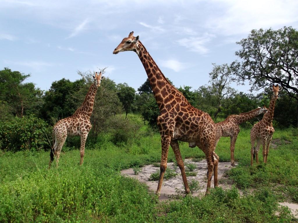 Senegal Safari Tours